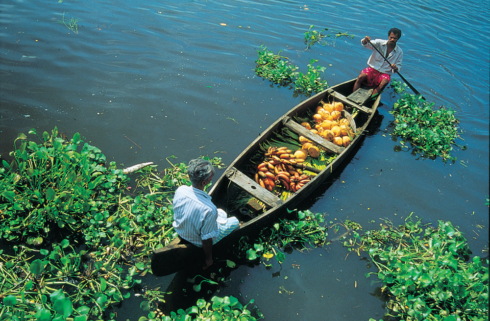 7 Days / 6 nights in Munnar – Thekkady – Kumarakam – Alleppey