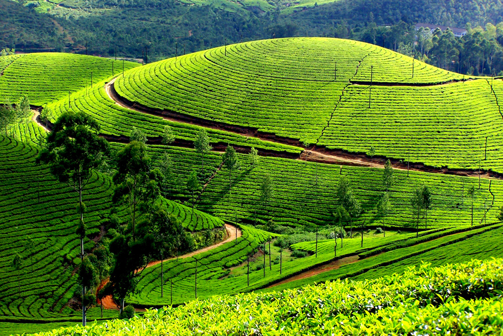 4 Days / 3 Nights in Munnar – Thekkady