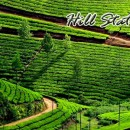 Honeymoon Tour Package: 12 Day / 11 Night in Kochi – Munnar – Thekkady – Kumarakom – Alleppey – Varkala – Trivandrum