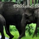 Honeymoon Tour Package: 6 Days / 5 Nights in Kochi – Kumarakom – Allappey – Kovalam – Trivandrum